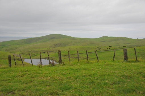 Motutapu : patûrage et clôture